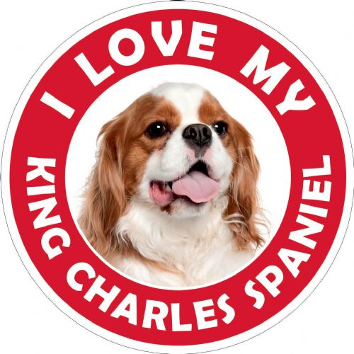 King Charles Spaniel sticker